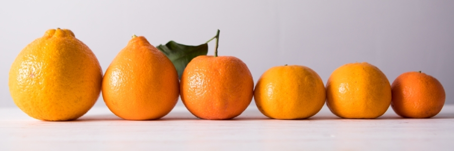 choose between fat graft, implants or mastopexy